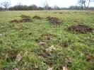 Mole <em>Talpa europaea</em> :: Mole hills